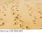 Купить «Footsteps on sand», фото № 25593691, снято 2 апреля 2015 г. (c) ИВА Афонская / Фотобанк Лори
