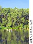 Купить «Beautiful summer landscape», фото № 25597599, снято 3 июля 2014 г. (c) Сергей Девяткин / Фотобанк Лори