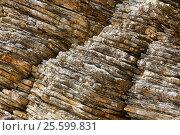 Купить «Слоистая структура каменной скалы на побережье Черногории», эксклюзивное фото № 25599831, снято 13 апреля 2016 г. (c) Артём Крылов / Фотобанк Лори