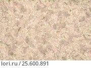 Купить «Красочный фон текстура», иллюстрация № 25600891 (c) Сергей Тихонов / Фотобанк Лори