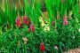 Summer flowers outdoors, фото № 25602603, снято 28 июля 2016 г. (c) Ярочкин Сергей / Фотобанк Лори