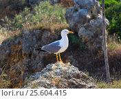 Купить «Seagull on stone.», фото № 25604415, снято 22 мая 2016 г. (c) Юрий Брыкайло / Фотобанк Лори