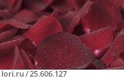 Купить «Rain pouring down on background of red rose petals slow motion stock footage video», видеоролик № 25606127, снято 11 февраля 2017 г. (c) Юлия Машкова / Фотобанк Лори