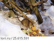 Трапеза. Стоковое фото, фотограф Роман Кузьмин / Фотобанк Лори