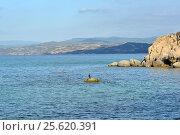Баклан, сидящий на комне у дикого пляжа городка Уранополиса, откуда уплывают паромы на Святую гору Афон. Греция (2013 год). Стоковое фото, фотограф Николай Гусев / Фотобанк Лори