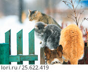 The dog chased cats on a wooden fence in the village. Стоковое фото, фотограф Бачкова Наталья / Фотобанк Лори