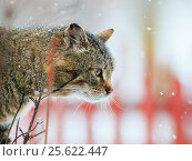 Beautiful terrible homeless cat during a spring snowfall. Стоковое фото, фотограф Бачкова Наталья / Фотобанк Лори