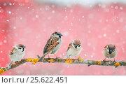 Купить «Cute birds sitting on the branch during a snowfall», фото № 25622451, снято 23 февраля 2017 г. (c) Бачкова Наталья / Фотобанк Лори