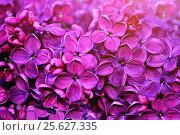 Купить «Lilac flowers, spring background», фото № 25627335, снято 23 мая 2016 г. (c) Зезелина Марина / Фотобанк Лори