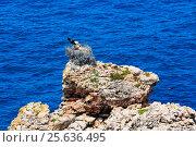 Купить «Nest of storks on rock.», фото № 25636495, снято 21 мая 2016 г. (c) Юрий Брыкайло / Фотобанк Лори