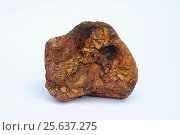 Купить «Limonite is an iron ore composed of iron oxides and hydroxides. This sample comes from Sierra de Albarracin, Teruel, Aragon, Spain.», фото № 25637275, снято 9 мая 2013 г. (c) age Fotostock / Фотобанк Лори