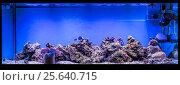 Купить «Большой панорамный аквариум с тропическими рыбами-ласточками (Chrysiptera hemicyanea) и рыбами-хирургами (Paracanthurus hepatus)», фото № 25640715, снято 18 апреля 2016 г. (c) Евгений Ткачёв / Фотобанк Лори