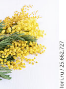 Fresh mimosa flower on wooden table. Стоковое фото, фотограф Юлия Младич / Фотобанк Лори