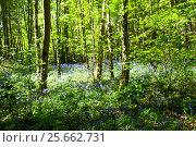 Купить «Весна в лесу», фото № 25662731, снято 15 мая 2016 г. (c) Татьяна Кахилл / Фотобанк Лори