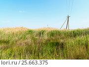 Купить «Заросли травы у Сакского озера. Крым», эксклюзивное фото № 25663375, снято 1 июня 2016 г. (c) Александр Щепин / Фотобанк Лори