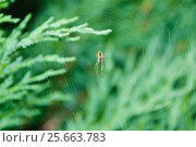 Купить «Паук на паутине», эксклюзивное фото № 25663783, снято 19 августа 2012 г. (c) Алёшина Оксана / Фотобанк Лори