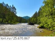 Купить «Mountain river Sema landscape in Altai», фото № 25670867, снято 8 июня 2015 г. (c) Михаил Коханчиков / Фотобанк Лори