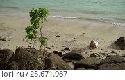 Young woman on a beach in beach dress. Стоковое видео, видеограф Алексей / Фотобанк Лори