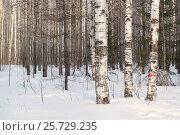 Мартовский лес. Стоковое фото, фотограф Olga Far / Фотобанк Лори
