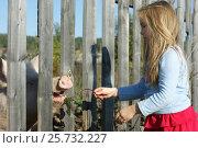 Ребёнок кормит животное. Стоковое фото, фотограф Юлия Мальцева / Фотобанк Лори