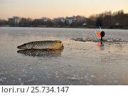 Купить «Зимняя ловля на жерлицы», фото № 25734147, снято 25 июня 2019 г. (c) Юрий Фатеев / Фотобанк Лори