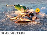 Купить «Зимняя ловля плотвы  со льда», фото № 25734151, снято 25 июня 2019 г. (c) Юрий Фатеев / Фотобанк Лори