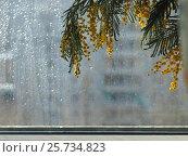 Купить «Mimosa against the window. A drop of rain. The concept of spring, comfort and beauty in the house», фото № 25734823, снято 22 января 2018 г. (c) Ирина Козорог / Фотобанк Лори