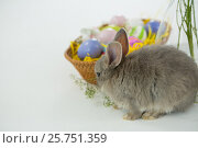 Купить «Basket with Easter eggs and Easter bunny», фото № 25751359, снято 10 января 2017 г. (c) Wavebreak Media / Фотобанк Лори