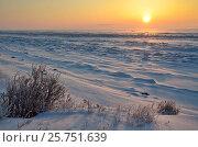 Купить «Заснеженный берег озера Байкал на восходе солнца зимним утром в районе мыса Кадильный», фото № 25751639, снято 7 марта 2017 г. (c) Овчинникова Ирина / Фотобанк Лори