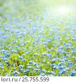 Купить «Sunny flowers spring background», фото № 25755599, снято 4 мая 2016 г. (c) Наталья Двухимённая / Фотобанк Лори