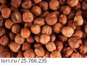 Купить «Фон из орехов Фундук», фото № 25766235, снято 24 февраля 2017 г. (c) Литвяк Игорь / Фотобанк Лори