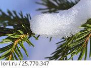 Еловая ветка в снегу. Стоковое фото, фотограф Галимова Надежда Александровна / Фотобанк Лори