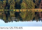 Купить «Evening summer lake landscape», фото № 25770435, снято 9 августа 2016 г. (c) Юрий Брыкайло / Фотобанк Лори