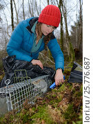 Купить «Catherine McNicol reading the PIT tag number of a Grey Squirrel (Sciurus carolinensis) she has re-trapped in a live capture trap while monitoring the squirrel...», фото № 25776687, снято 24 октября 2018 г. (c) Nature Picture Library / Фотобанк Лори