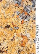 Купить «RF- Lichens on rock, Torridon, Scotland, UK, November.», фото № 25776879, снято 17 августа 2018 г. (c) Nature Picture Library / Фотобанк Лори