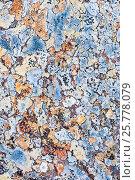 Купить «Lichens on rock, Torridon, Scotland, UK, November.», фото № 25778079, снято 17 августа 2018 г. (c) Nature Picture Library / Фотобанк Лори