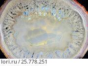 Яркий рисунок на срезе белого агата. Стоковое фото, фотограф Алексей Баринов / Фотобанк Лори
