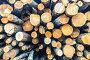 Заготовка древесины, фото № 25778555, снято 23 марта 2017 г. (c) Михаил Михин / Фотобанк Лори