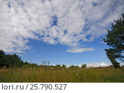 Grassy field and trees with blue sky with clouds on background, landscape in summer sunny day. Стоковое фото, фотограф Мария Сидельникова / Фотобанк Лори