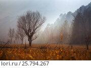 Misty dawn over wooded mountains. Стоковое фото, фотограф Яков Филимонов / Фотобанк Лори