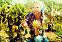 Woman picking ripe grapes on vineyard, фото № 25794479, снято 21 марта 2017 г. (c) Яков Филимонов / Фотобанк Лори
