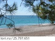 Вид на морской пляж через сосновые иголки. Стоковое фото, фотограф Дмитрий К / Фотобанк Лори