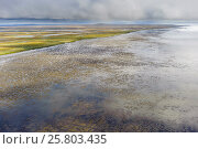 Купить «Mudflats on the Yukon Delta National Wildlife Refuge, Alaska, USA, September 2010. The delta contains the single largest expanse of intertidal habitat...», фото № 25803435, снято 18 марта 2018 г. (c) Nature Picture Library / Фотобанк Лори