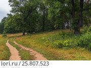 Старая грунтовая дорога на опушке леса. Стоковое фото, фотограф Kroshanya / Фотобанк Лори