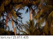Пальмы на фоне неба вечером. Стоковое фото, фотограф Souchko Jegor / Фотобанк Лори