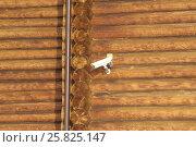 Купить «Камера видеонаблюдения на бревенчатой стене», фото № 25825147, снято 25 марта 2017 г. (c) Иванова Анастасия / Фотобанк Лори