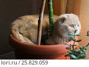 Кот в горшке. Стоковое фото, фотограф Metzlof / Фотобанк Лори