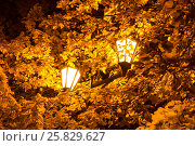 The street lamp in the leaves of the autumn trees (2013 год). Стоковое фото, фотограф Павел Лиховицкий / Фотобанк Лори