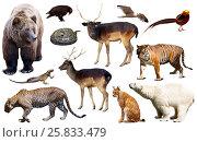 Купить «asia animals isolated», фото № 25833479, снято 25 марта 2019 г. (c) Яков Филимонов / Фотобанк Лори