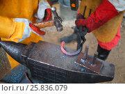 Купить «Process of forging iron red-hot horseshoe on anvil billet in smithy», фото № 25836079, снято 13 июня 2014 г. (c) Losevsky Pavel / Фотобанк Лори